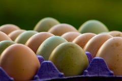 Ovos frescos da exploração agrícola imagens de stock