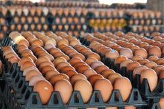 Ovos frescos da exploração agrícola Imagens de Stock Royalty Free