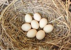 Ovos frescos da galinha Fotografia de Stock Royalty Free