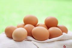 Ovos frescos da galinha Imagens de Stock