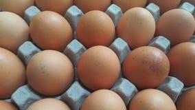 Ovos frescos da galinha da exploração agrícola em um suporte da ovo-caixa ou do ovo colocado no mercado para a venda fotos de stock