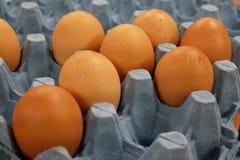Ovos frescos da galinha da exploração agrícola no suporte do cartão Fotografia de Stock Royalty Free