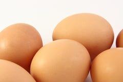 Ovos frescos das aves domésticas da exploração agrícola Fotografia de Stock Royalty Free