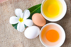 Ovos frescos diferentes e ovos do pato Fotografia de Stock