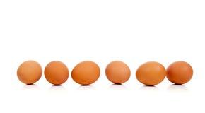Ovos inteiros de Brown em uma fileira no branco Imagens de Stock