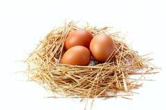Ovos isolados no fundo branco Fotografia de Stock