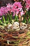 Ovos manchados em um ninho, flores cor-de-rosa no fundo Copie o espaço Foto de Stock