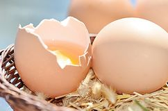 Ovos marrons crus foto de stock