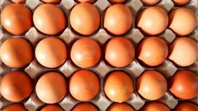 Ovos marrons de Fresg Fotos de Stock
