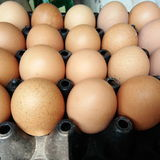 Ovos marrons frescos Imagens de Stock