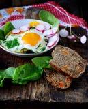 Ovos mexidos com espinafres e rabanete Foto de Stock Royalty Free