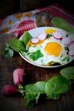 Ovos mexidos com espinafres e rabanete Fotografia de Stock Royalty Free