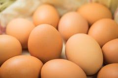 Ovos, muitos ovos Imagem de Stock Royalty Free