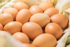 Ovos, muitos ovos Fotos de Stock