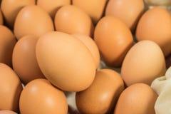 Ovos, muitos ovos Imagens de Stock Royalty Free