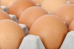 Ovos na bandeja Fotografia de Stock