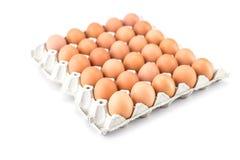 Ovos na bandeja de papel Imagem de Stock