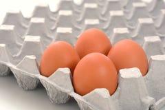 Ovos na bandeja de papel isolada no branco Imagem de Stock