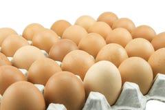 Ovos na bandeja de papel isolada no fundo branco Foto de Stock