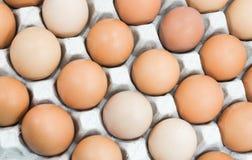 Ovos na bandeja de papel, ovos de Brown em uma caixa do ovo Fotografia de Stock