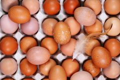 Ovos na bandeja, vista superior Fotografia de Stock