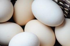 Ovos na cesta de Easter Foto de Stock