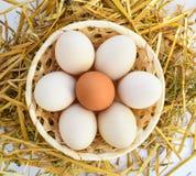 Ovos na galinha da palha do alimento do ninho fotografia de stock
