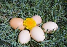 Ovos na grama Fotos de Stock Royalty Free