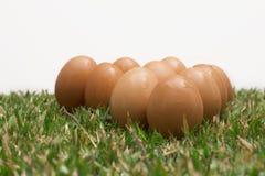 Ovos na grama Imagem de Stock