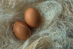 Ovos na grama decorativa Imagens de Stock Royalty Free