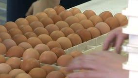 Ovos na linha de empacotamento vídeos de arquivo