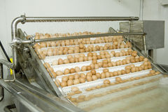 Ovos na linha de produção Fotografia de Stock Royalty Free