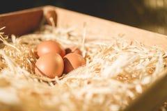 Ovos na palha Foto de Stock Royalty Free