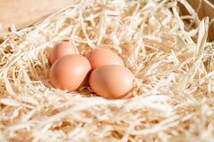 Ovos na palha Imagens de Stock