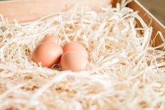 Ovos na palha Imagem de Stock