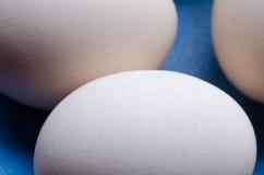 Ovos na placa azul Foto de Stock Royalty Free