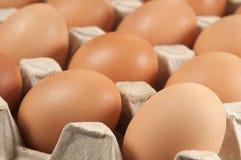 Ovos na sustentação do cartão imagem de stock royalty free