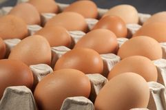 Ovos na sustentação do cartão fotografia de stock