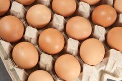 Ovos na sustentação do cartão foto de stock royalty free