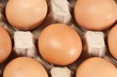 Ovos na sustentação do cartão fotografia de stock royalty free