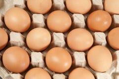 Ovos na sustentação do cartão foto de stock