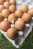 Ovos no empacotamento de papel Imagem de Stock