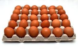 Ovos no molde Fotografia de Stock
