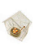 Ovos no ninho confinado na gaiola de pássaro fotos de stock