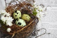 Ovos no ninho na Bíblia imagens de stock