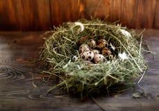 Ovos nos ovos de codorniz do ninho Ninho em um fundo de madeira Fotos de Stock Royalty Free
