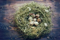 Ovos nos ovos de codorniz do ninho Ninho em um fundo de madeira Foto de Stock Royalty Free