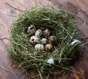 Ovos nos ovos de codorniz do ninho Ninho em um fundo de madeira Imagem de Stock