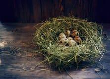 Ovos nos ovos de codorniz do ninho Ninho em um fundo de madeira Imagens de Stock