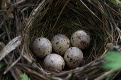 Ovos olímpicos fotografia de stock
